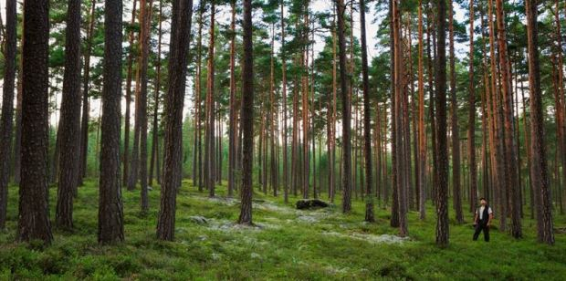 stora enso forest.jpg
